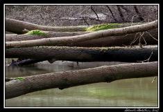 Robečský potok